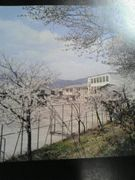 加茂川52