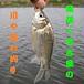 尾張☆名古屋の川や池の釣り
