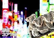 新宿コアラ館/無銘喫茶第一土曜