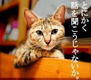猫大好きフリスキー♪