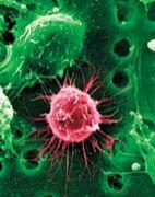 Stem Cell Biology
