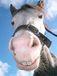 Waimakriver Horse Treks
