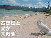 ペットと暮らす八重山・石垣島
