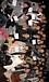2010年度慶應大学薬学部1年3組