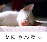 弛人(ふにゃんちゅ)