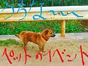 【沖縄】ペットのイベント情報