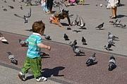 つい鳩を追い掛けてしまう人