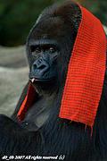 Team Gorilla!!