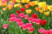 花畑のゆかいな仲間たち