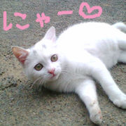(=・ω・=)ニャー♥