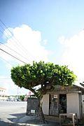 沖縄のまちやーぐわー友寄商店