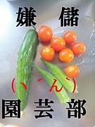 嫌儲園芸部 (´ん`)