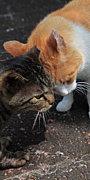 〜猫の集い〜