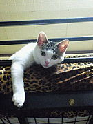 日本全土ネコ旅