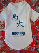 石垣島Goodog