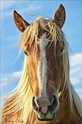 ☆彡朝まで馬ヅラから騒ぎ☆彡