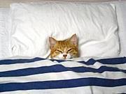 雨の日にひたすら寝る会