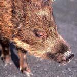 恋愛猪突猛進型
