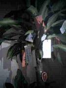 SIXLOUNGE 幸福の木