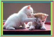 ●ワンクリックで動物を救う●