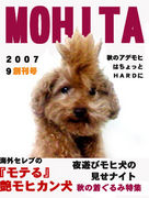 Dog of Mohican
