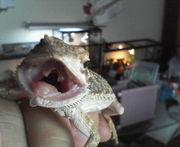 爬虫類♪飼育相談