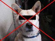 犬が嫌い。