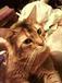 TOPの猫は我が家の愛猫