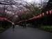 上野公園で夜桜を見る会
