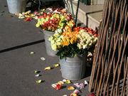 パリの花大好き