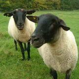 Sheep☆farm