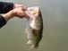 香川のBASS釣り