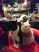 searchlight 新潟市古町の猫Bar