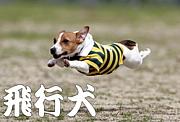 飛行犬@南あわじドッグラン