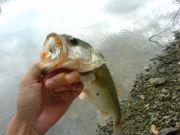 愛知大学 釣りサークル