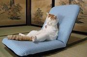 座椅子同好会