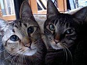 猫友作ろう in 関西