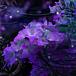 Hydrangea / INORAN