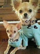 函館ガウガウ小犬 UёェёU★