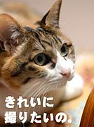 コスプレ@写真部