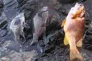 関西魚釣り(うおつり)連盟