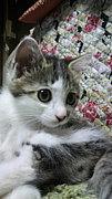 ☆猫を飼ってる&沢山いる方☆