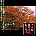 高尾山で美しい紅葉を・・・