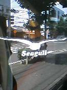 Seagull Surf Shop
