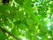 green: walax