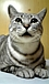 サバトラ猫が好き