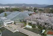 京都府立植物園で遊ぼう