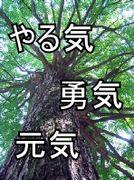 東京都品川区立三木小学校