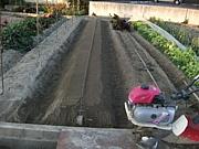 野菜栽培・家庭菜園