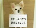 ☆WaiFull☆